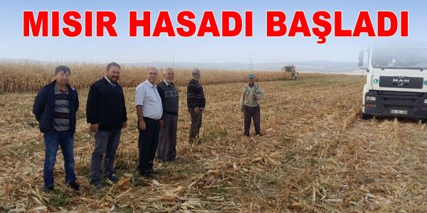 Mısır ilk defa bu yıl geniş kapsamlı ekildi