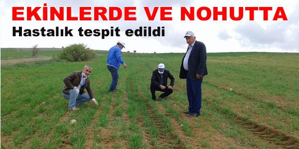 Talepte bulunan çiftçilerin arazileri kontrol edildi