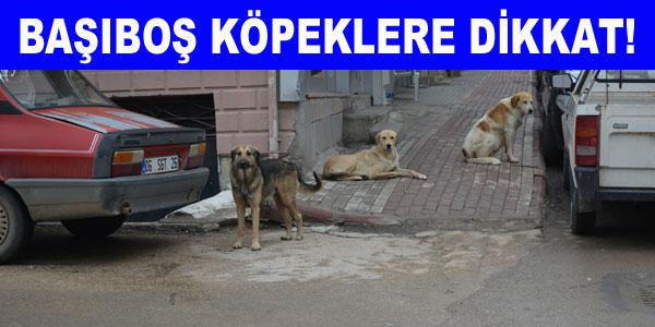 Başıboş köpeklere önlem alınmayacak mı?